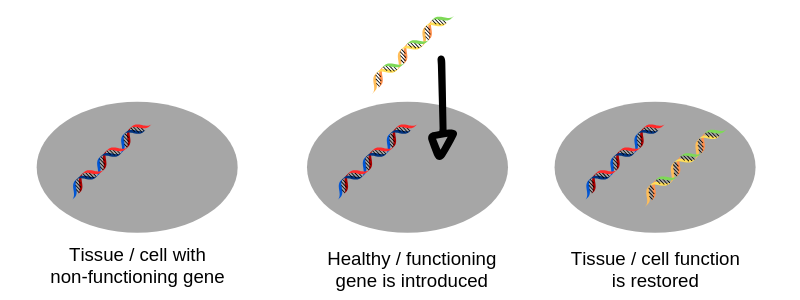 How AAV-mediated gene therapy works