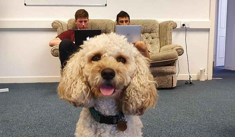 A photo of a dog with Marcos and Rory working in the background.